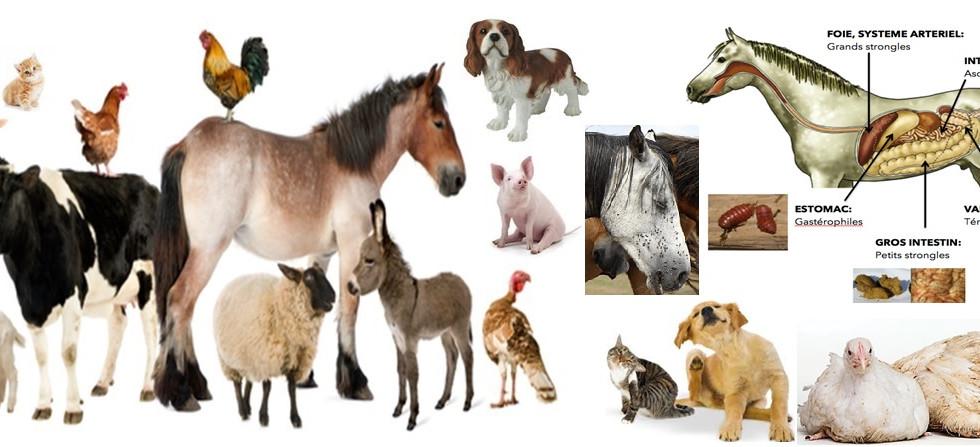 PROTECTION ET NUTRITION DES ANIMAUX DES ELEVAGES ET DOMMESTIQUE