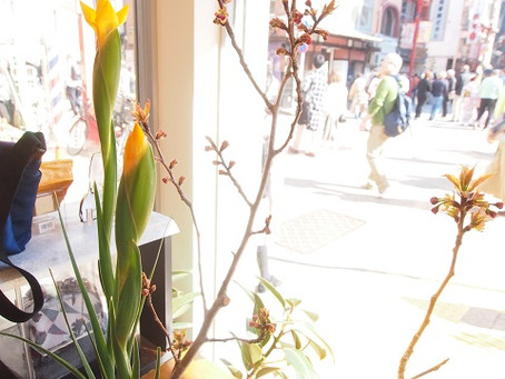 八重桜とアイリス