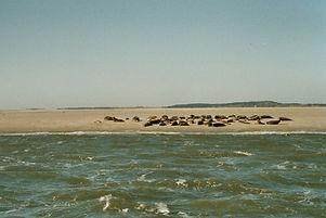 Plattboden zeehonden.jpg