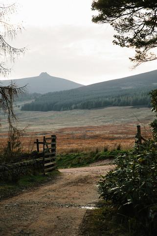 Glen+Dye+-+Landscapes-16.jpeg