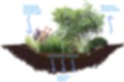 New soil.plants.png