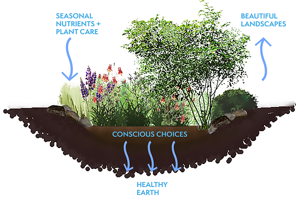 New soil.plants.png