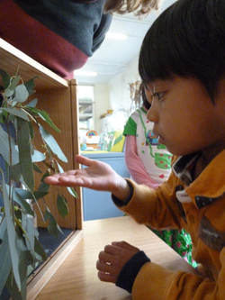 Stick insect exploration