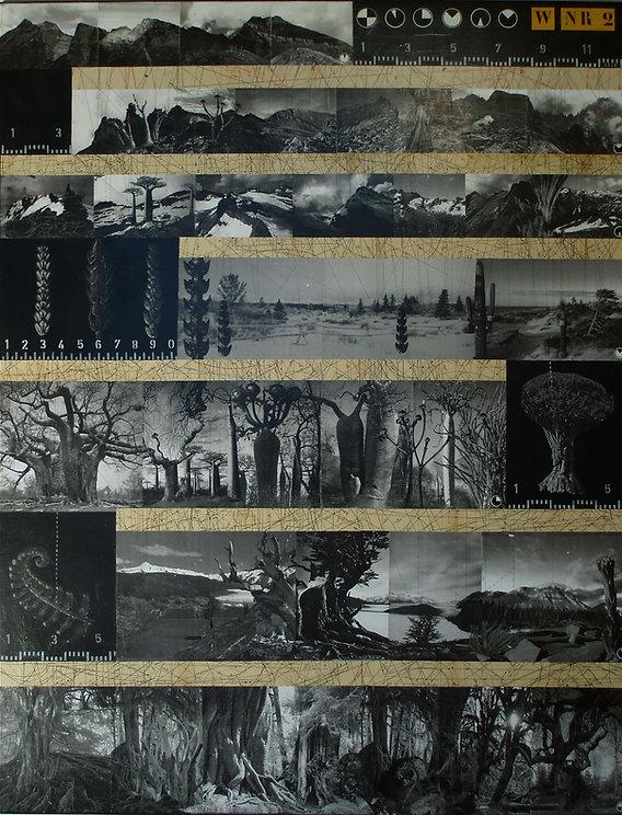 entwicklung, development, collage