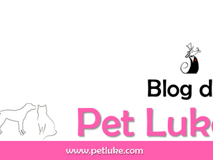 Bem-vindos ao Blog Pet Luke!