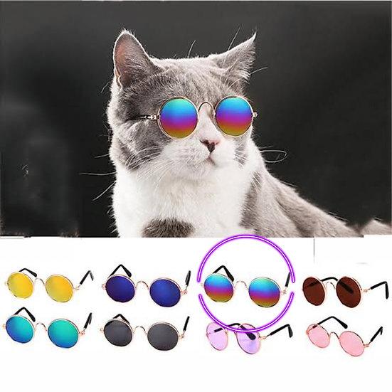 Lojista: 5 Óculos Pet Multicolor