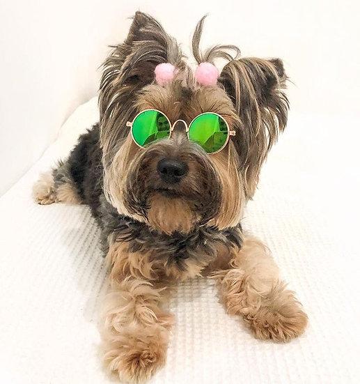 Óculos Pet Verde