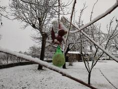 Uccelli Selvatici: Come aiutarli correttamente nella stagione fredda.