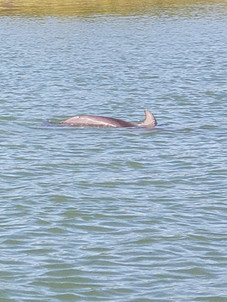Dolphin playing in the bay
