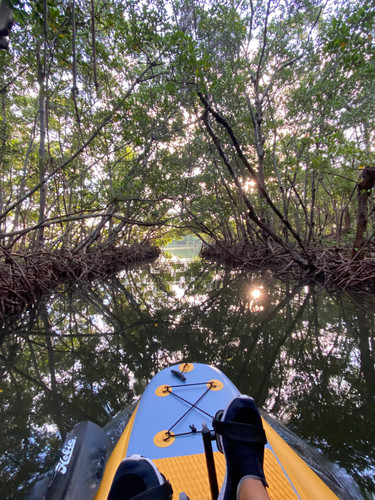 Mangrove Tunnel near Sarasota
