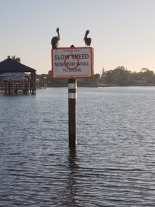 Pelicans on the sign