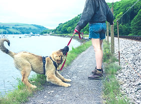 Train-Dog-Stop-Pulling-Leash