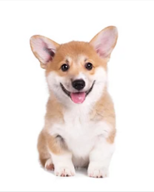 puppy in training class