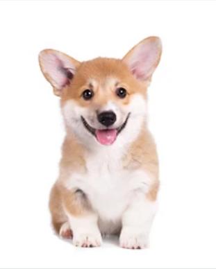 puppy-training-denver.png