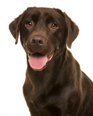 dog-training-happydog.png
