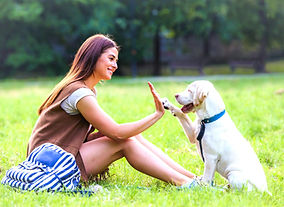 Denver-Puppy-Training-Classes