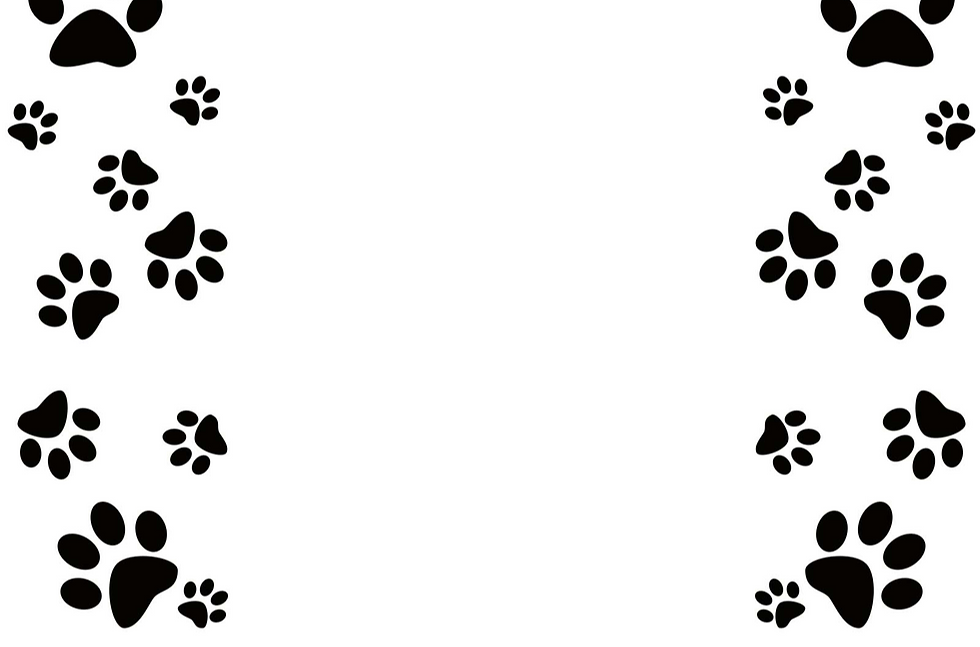 dog-paw-border-2_edited_edited_edited_ed