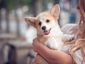 When Should You Start Dog Training Classes?