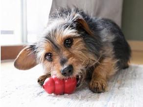 Behavior Benefits of Chew Toys & Puzzles