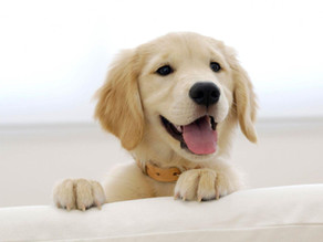 3 Most Important Things to Teach Your Puppy