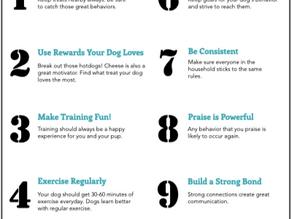 Top Ten Training Tips