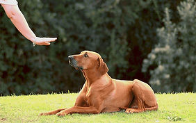 Dog-Training-Obedience-Classes