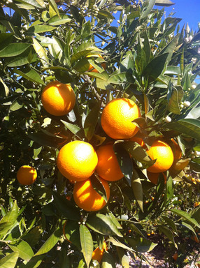 finca+naranjos01.jpg