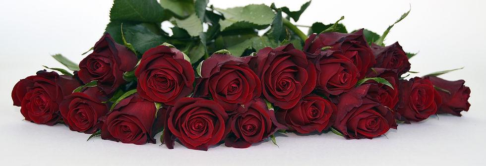 nature-plant-flower-petal-bouquet-rose-6