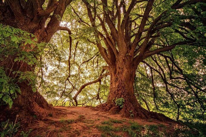 Bains_de_forêt.jpg