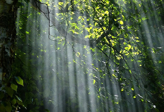 forest-56930_1280_edited.jpg