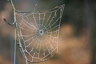 cobweb-5767699_1920.jpg