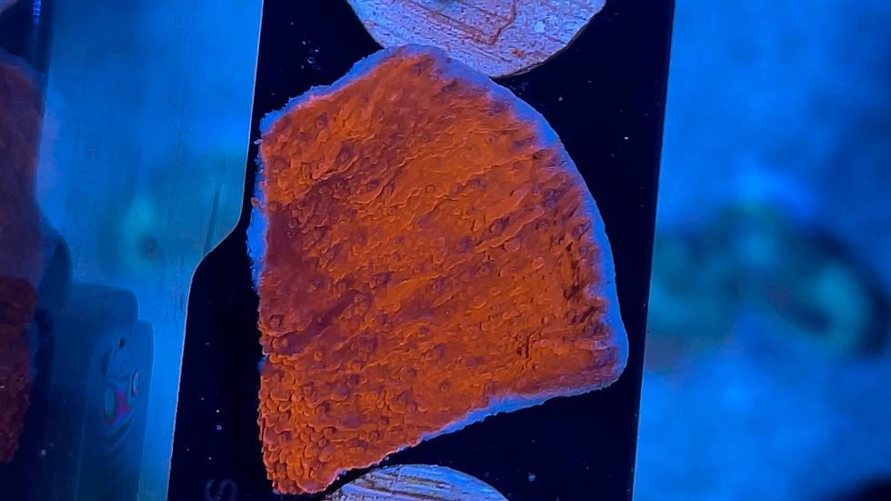 Red Monti Cap WYSIWYG