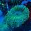 Thumbnail: Neon Green Fuzzy Mushroom