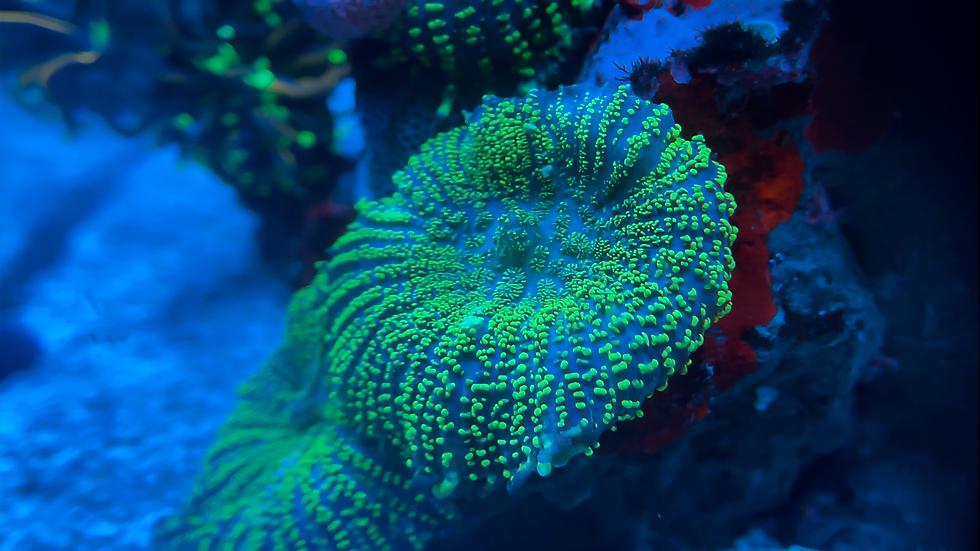 Neon Green Fuzzy Mushroom