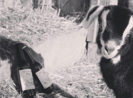 Den Ziegen folgen – Wie tiergestützte Pädagogik wirken kann