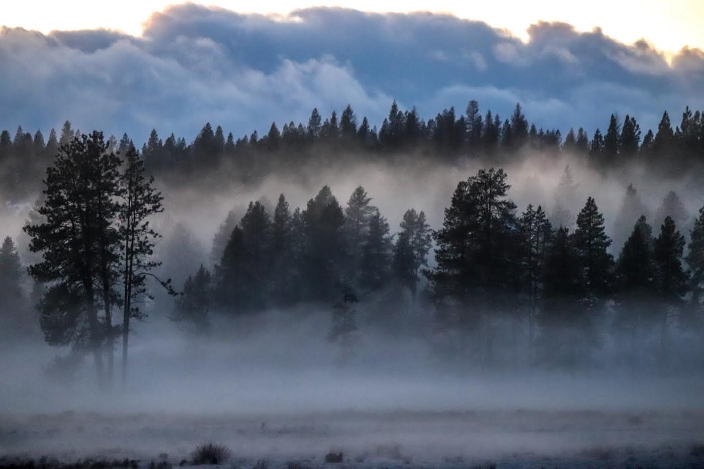 Winter Mist by Misty Wadzeck score 20
