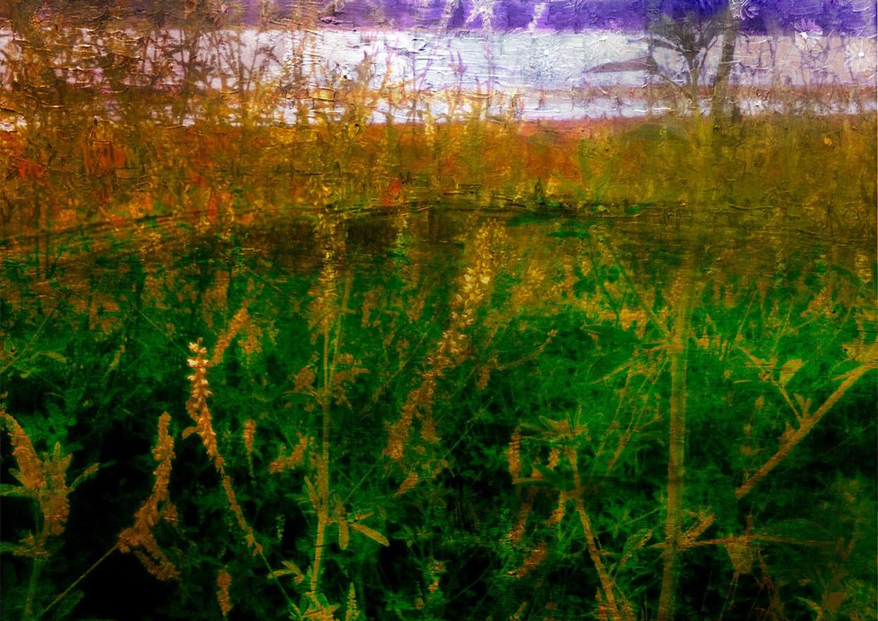 Lake Weeds