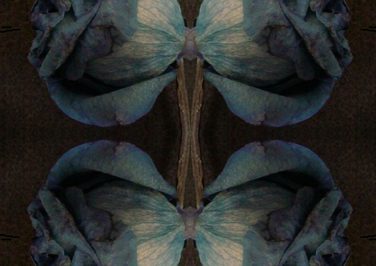Blue Rose #4