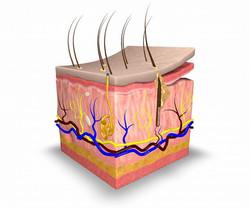 skin-layers-1030x858