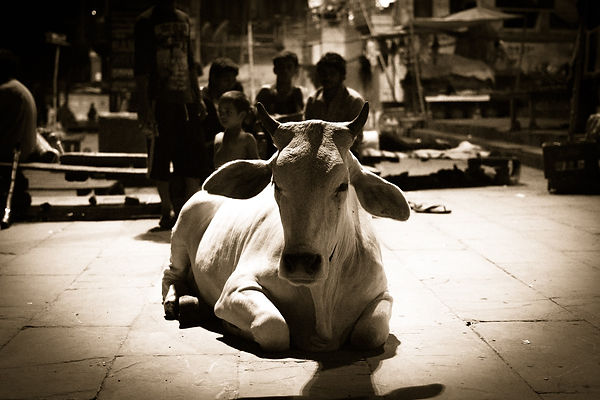 DrShiva India moods varanasi
