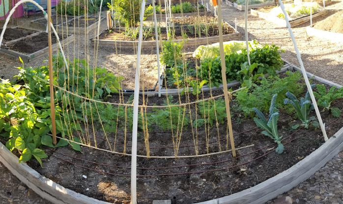 My New Garden Plot