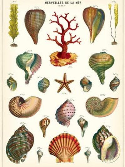Large Seashell Gift Wrap