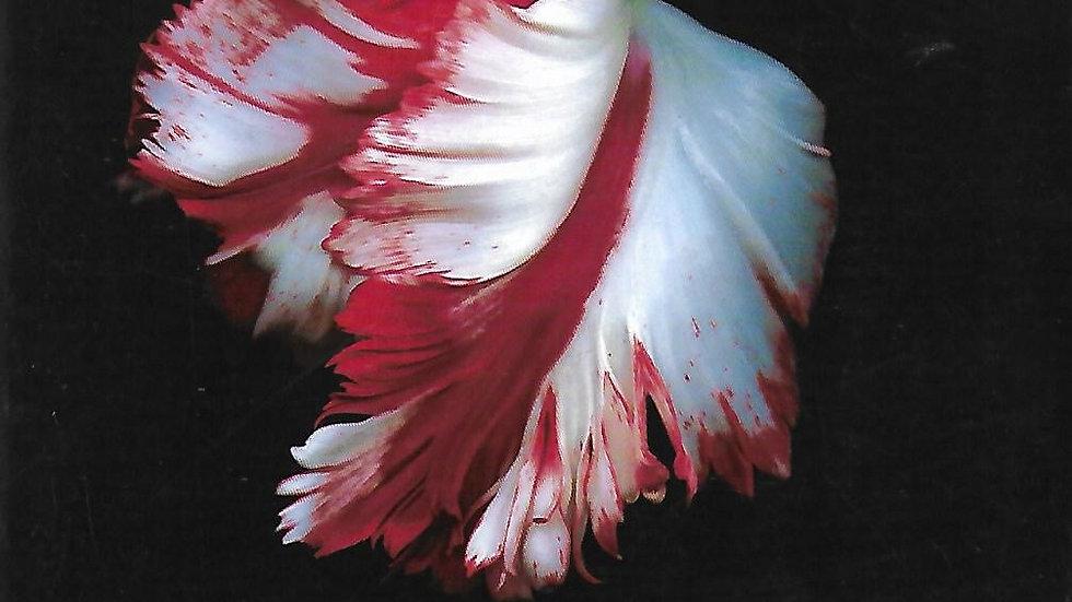 Tentation- Stephenie Meyer