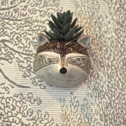 Raccoon Dog Head Wall Mounted Vase