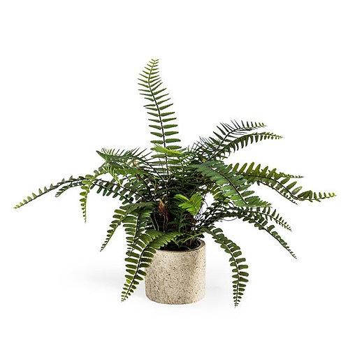 Decorative Ornamental Potted Fern Plant