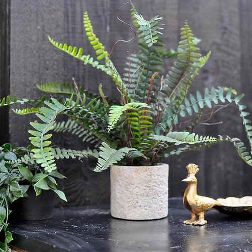 Decorative Ornamental Potted Fern Plant