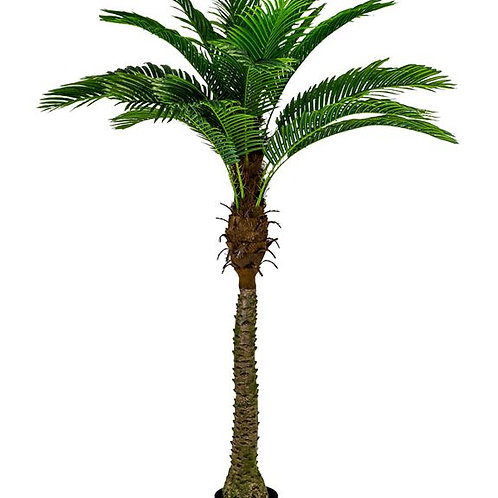 Ornamental Large Palm Tree in Black Pot