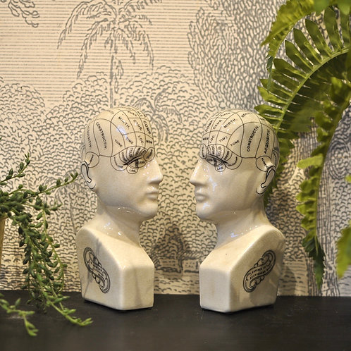 Quirky Split Phrenology Head Bookends
