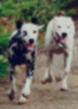 Hedley and Casper.jpg