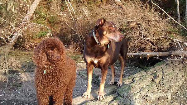 Miles & Owen golden light beach.jpg